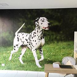 Painel Fotográfico para decoração de clínica Vaterinária em Moema