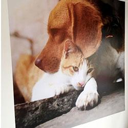 Painel Fotográfico para Pet Shop